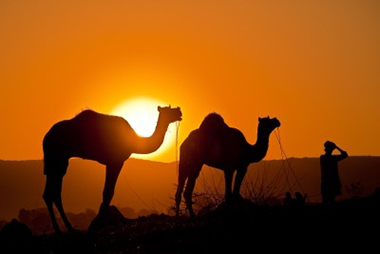 about-rajasthan-om-travel-agency-in-udaipur-rajasthan